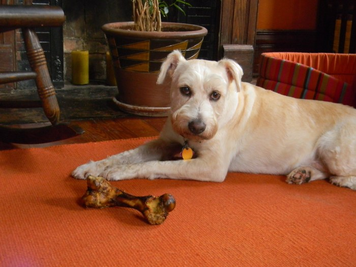 white dog with bone