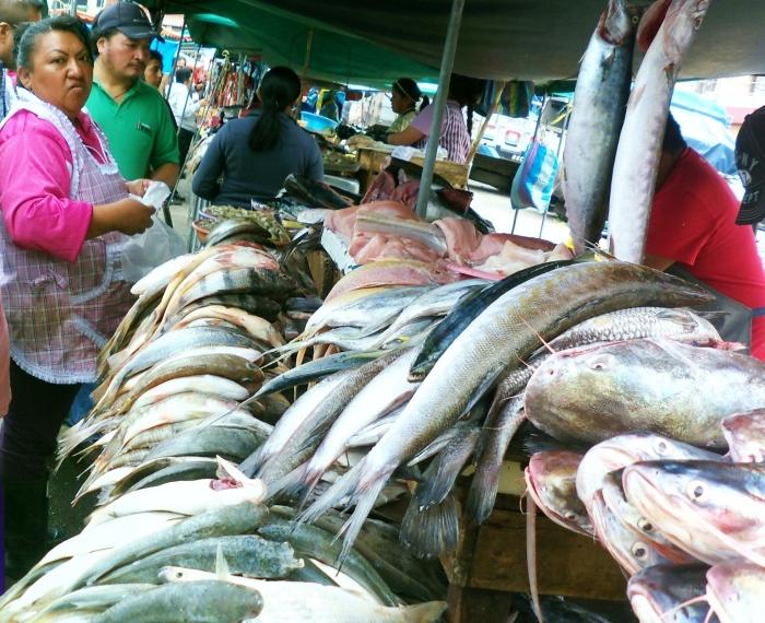 Fresh fish--