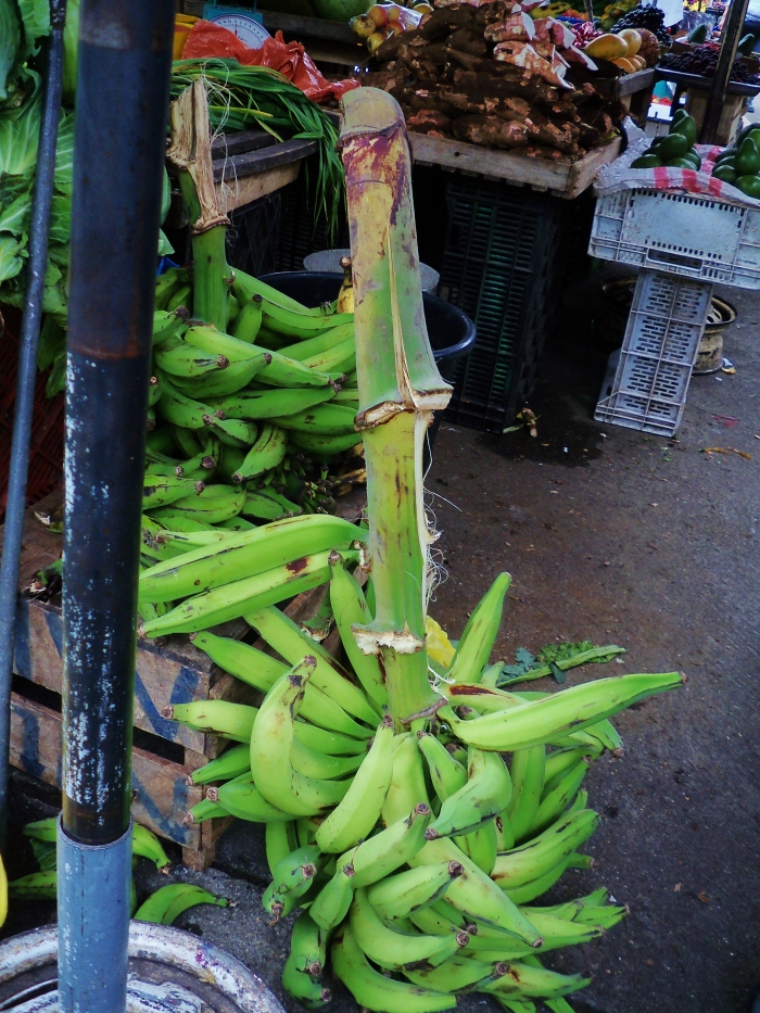 "Bananas are still on the branch.  Where all of the ""Dole"" labels?"