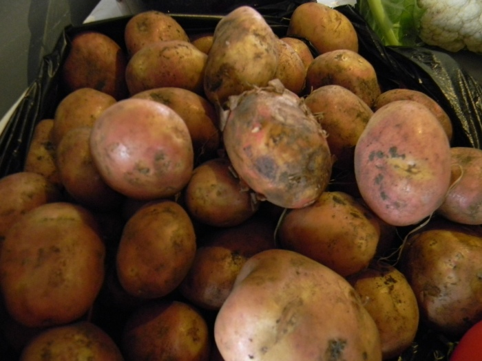 Did you know that Ecuador grows more than 500 varieties of potatoes?