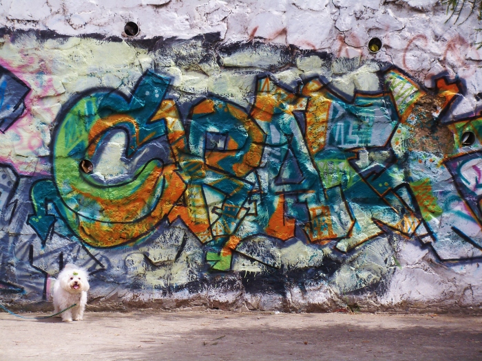 Dog-tag?  (Kathy's image)