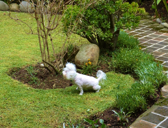 Lucy took full advantage of the garden in our short-term rental!