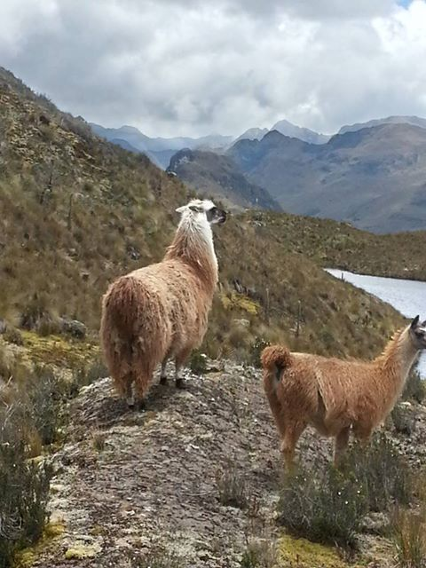 Juan got the best image of the day--llamas enjoying the view.