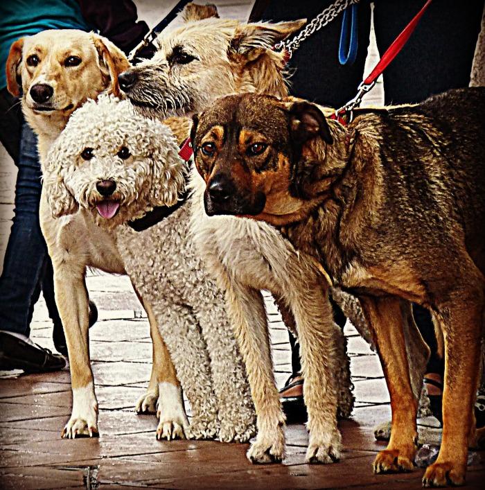 101313Cuenca Canines